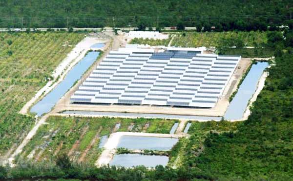 USA Florida American Mariculture